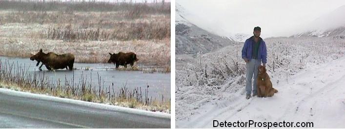 moose-crossing-pond-steve-kirby.jpg