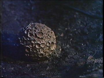 blob-meteorite.png