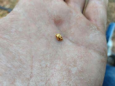 gold inside.jpg